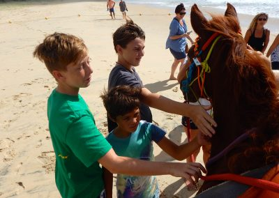 Greeting the tourists is all part of the job for our horses