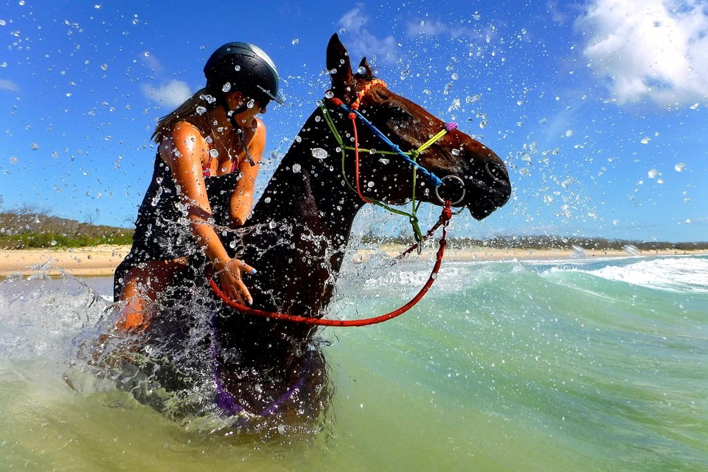 Forget swimming with the dolphins try swimming with the horses