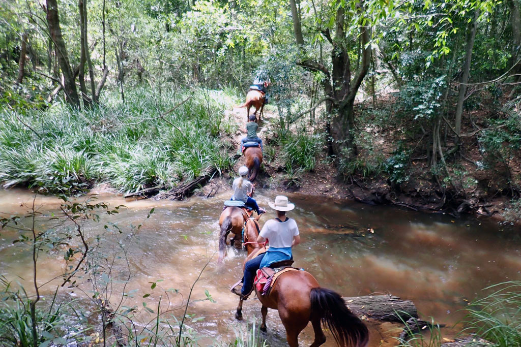 Horse riding through natural bush land, across creeks and over mountains